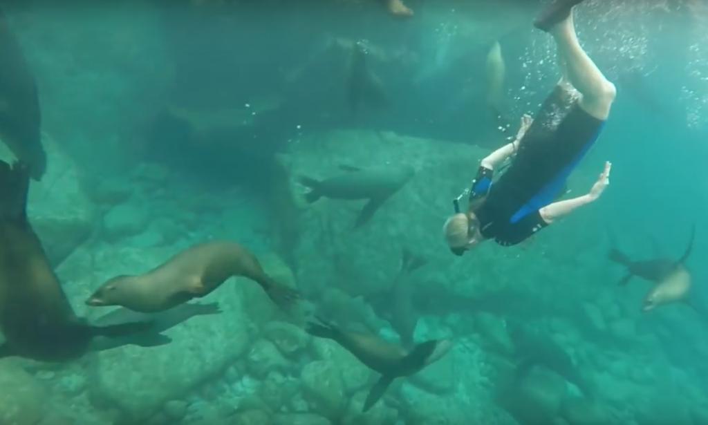 Swim with seals…